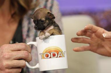 Dog Coffee Cup