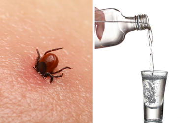 Encephalitis tick / Vodka poured into a glass
