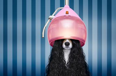 Dog Hairdo Salon
