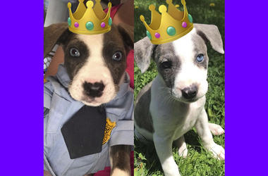 Royal Dogs 2