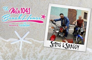 Sting Shaggy Final Creative WEB