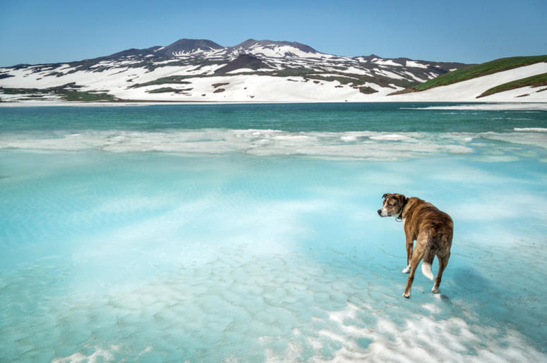 Dog on ice