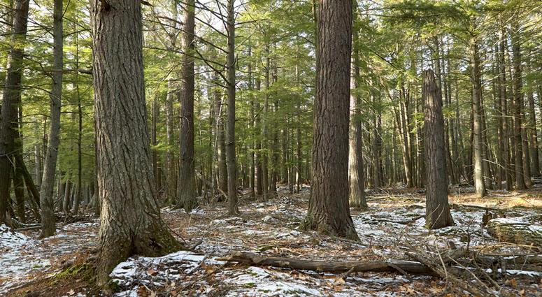Michigan DNR Auctioning Off Public Land Parcels   WWJ