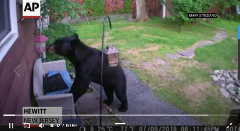 dog chases bear