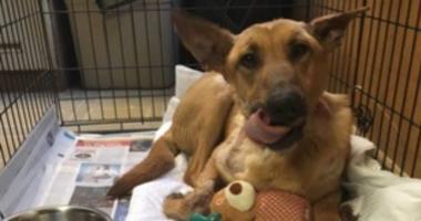 dog burned by owner