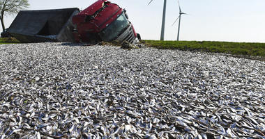 fish spill in field  (Stefan Sauer/dpa via AP)
