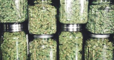 Marijuana in jars
