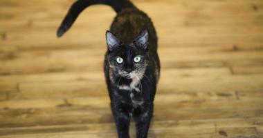 cat AP photo
