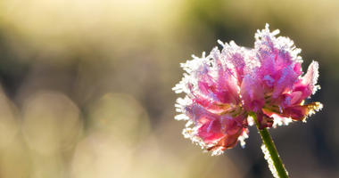 frost in spring