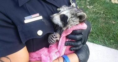 Flint police rescue baby raccoon