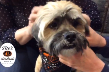 Pet of the Week Buster