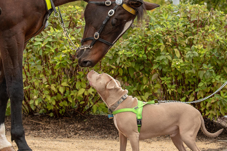 Giddy Up Pup