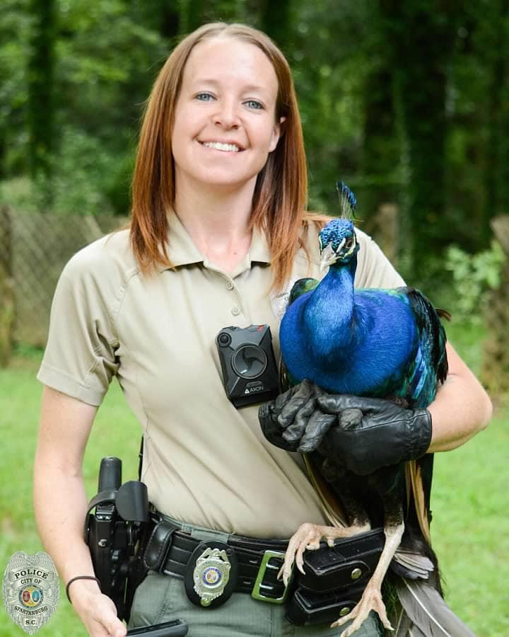 Spartanburg officer Jessica Leigh with a found peacock