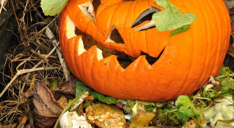 Old Jack-O-Lantern in a compost bin